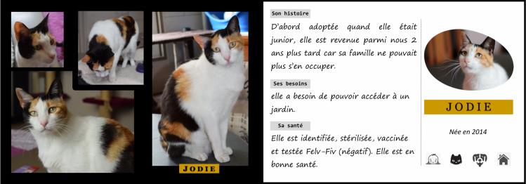 Presentation jodie